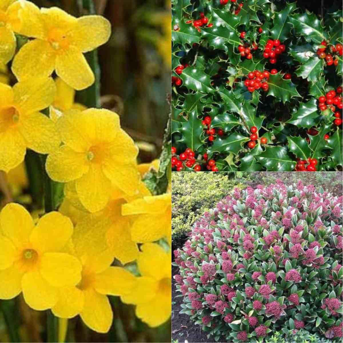Giardino d inverno piante e fiori per un prato colorato e for Giardini fioriti tutto l anno