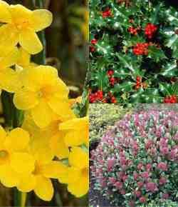 Giardino d'inverno: piante e fiori per un prato colorato e vivace tutto l'anno
