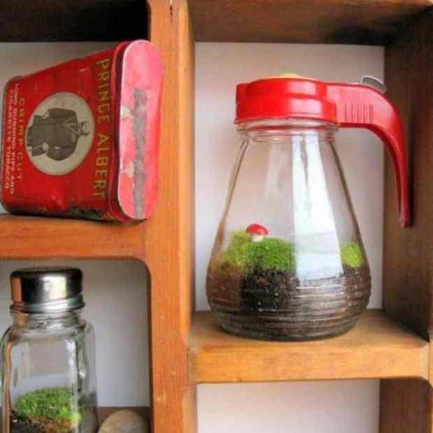 mini terrario realizzato all'interno di una caraffa