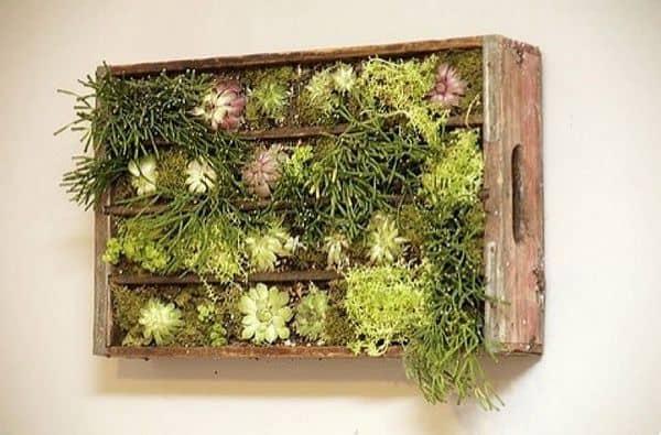 Muro vivente realizzato con un vecchio contenitore di legno