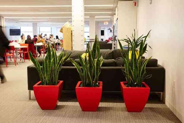 La Sanseveria è una pianta tropicale, è semplice e molto minimal e la sua caratteristica principale è quella di avere foglie sottili e verticale con delle piccolebande irregolari che ricordano la pelle di un rettile