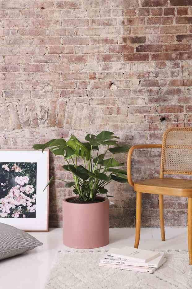 piante d'appartamento