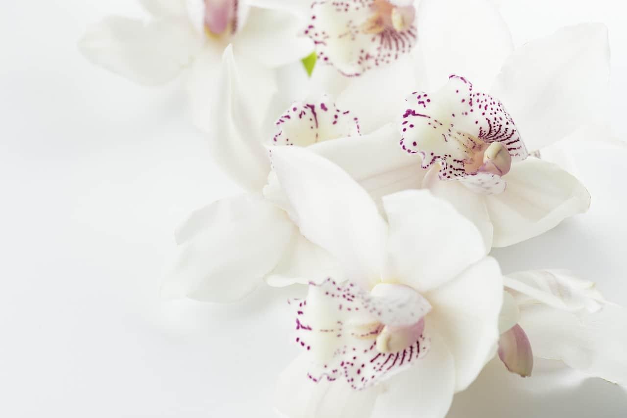 E Salvare Le Orchidee Dall'inverno