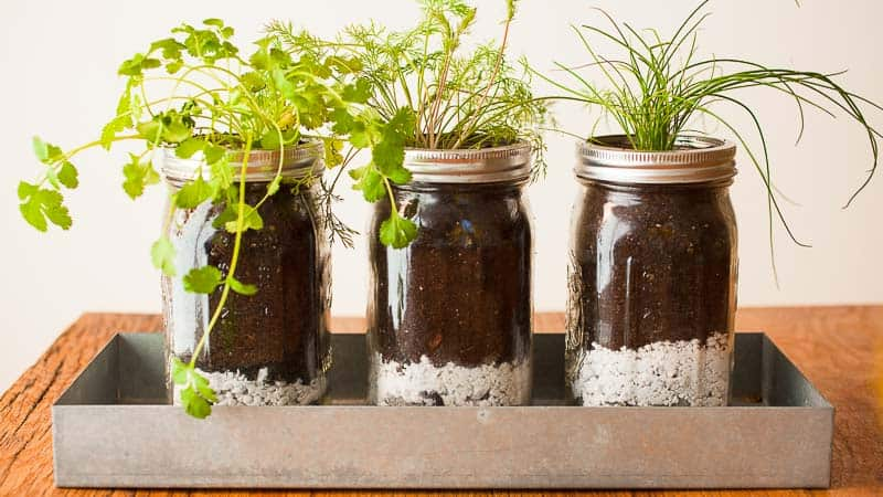 Barattoli di vetro trasformati in vasi fai da te per le piante aromatiche