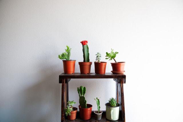 Stand di piante grasse