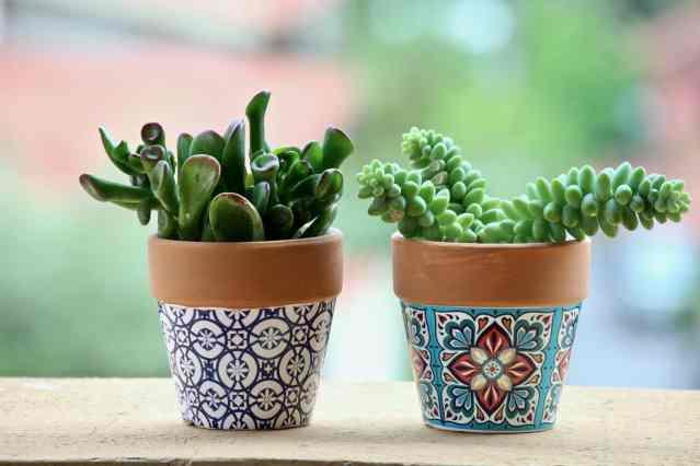 vasi di piante grasse, perfette per arredare casa con una varietà di piante facili da coltivare
