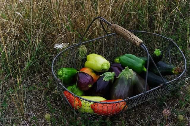 L'orto di settembre: il raccolto e i lavori da fare