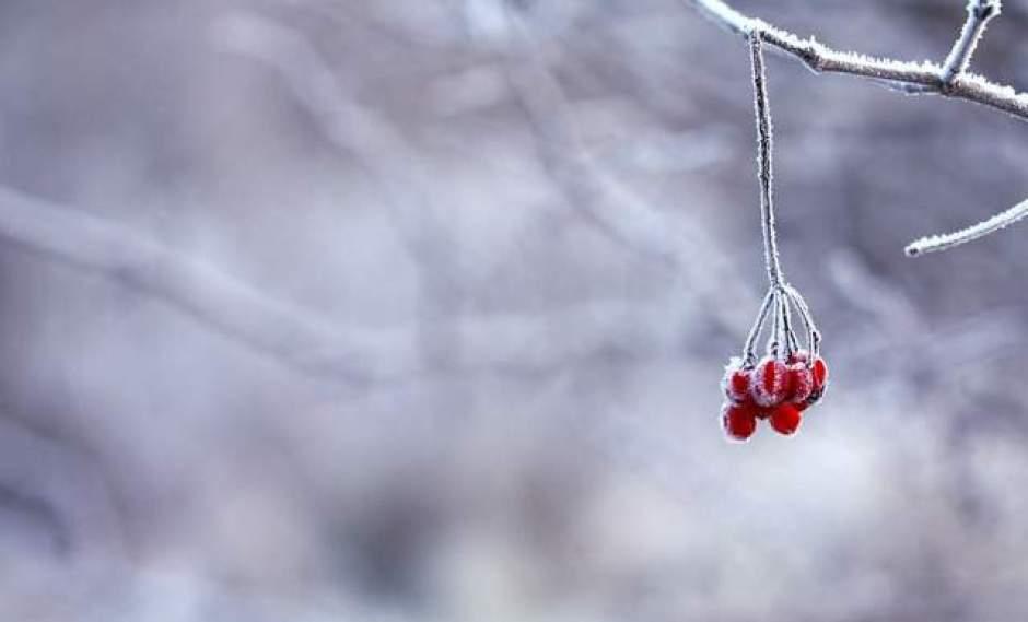 specie arboree invernali