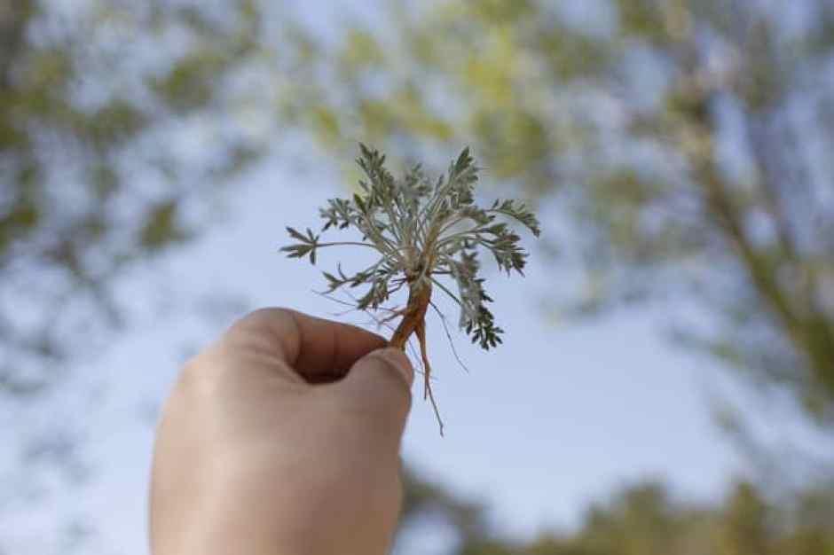 radici della pianta