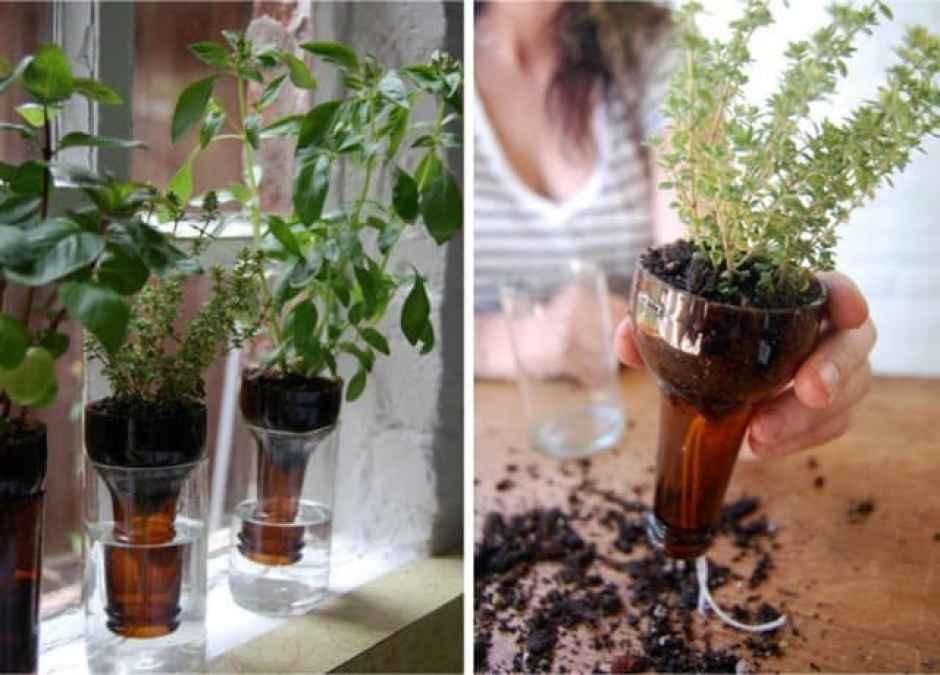 Da bottiglie a vasi per le piante