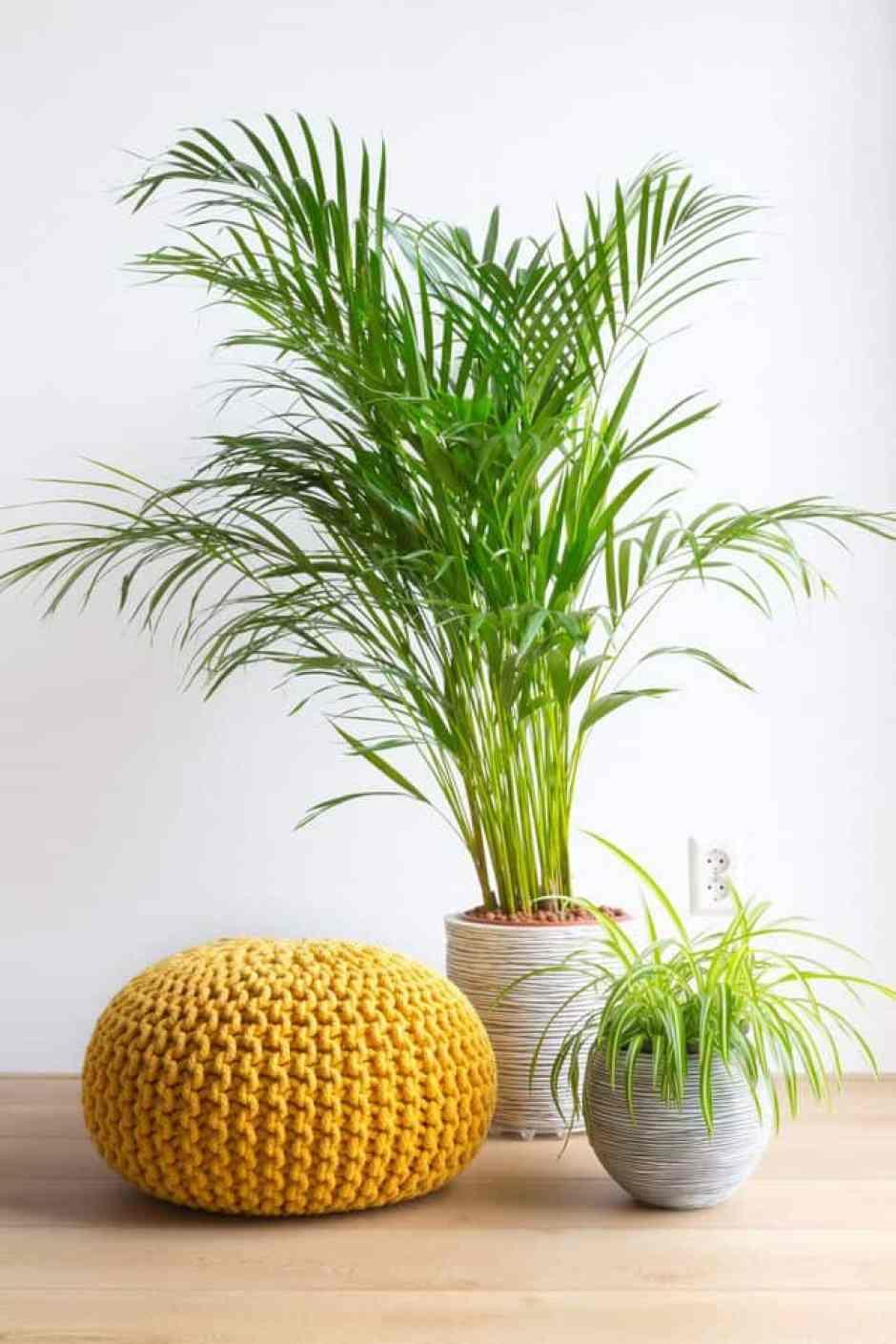 Tronchetto Della Felicità Da Esterno 10 piante da interno per una casa super chic - guida giardino