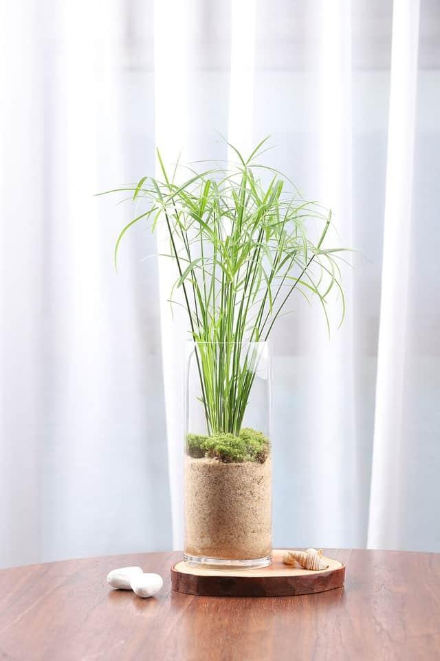 Una pianta idroponica, coltivata secondo il metodo della serra naturale autosufficiente