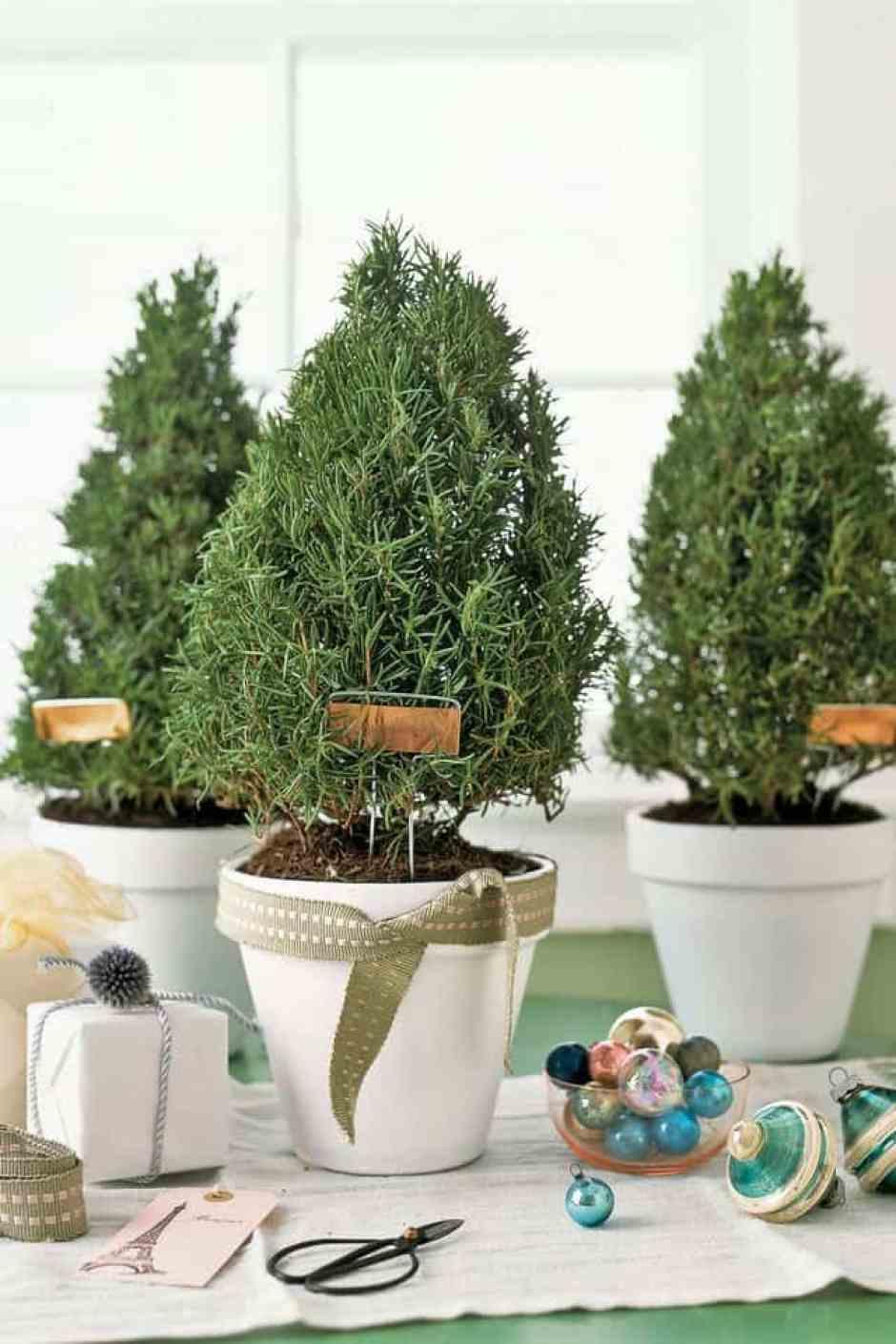 Mini piante di rosmarino, perfette per creare un abete di Natale fai da te