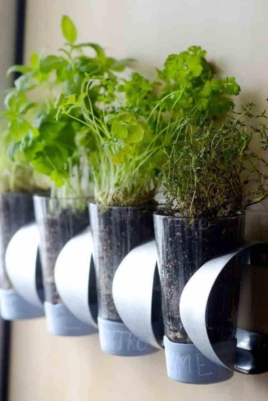 erbe aromatiche all'interno di vasi a sospensione