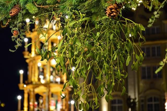 Caratteristiche del vischio, la pianta tipica del Natale dalla storia antica