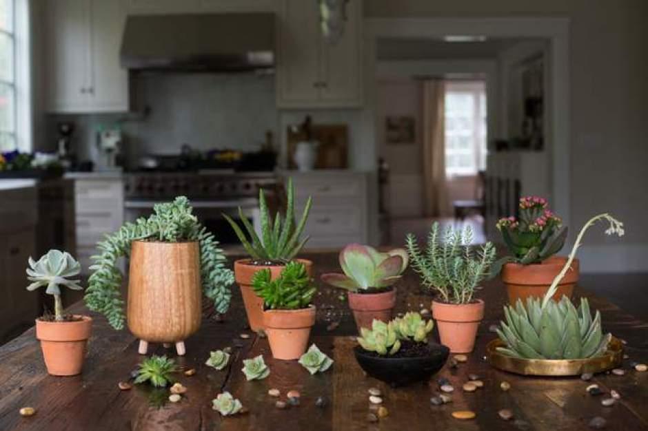 Collezione di succulente di varie forme e dimensioni