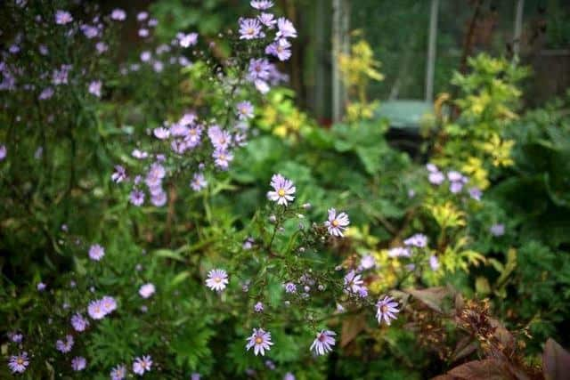 Insetti impollinatori sulle piante annuali