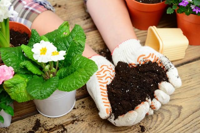 Terriccio di buona qualità per coltivare piante e fiori, indispensabile per la buona riuscita di un progetto di giardinaggio.
