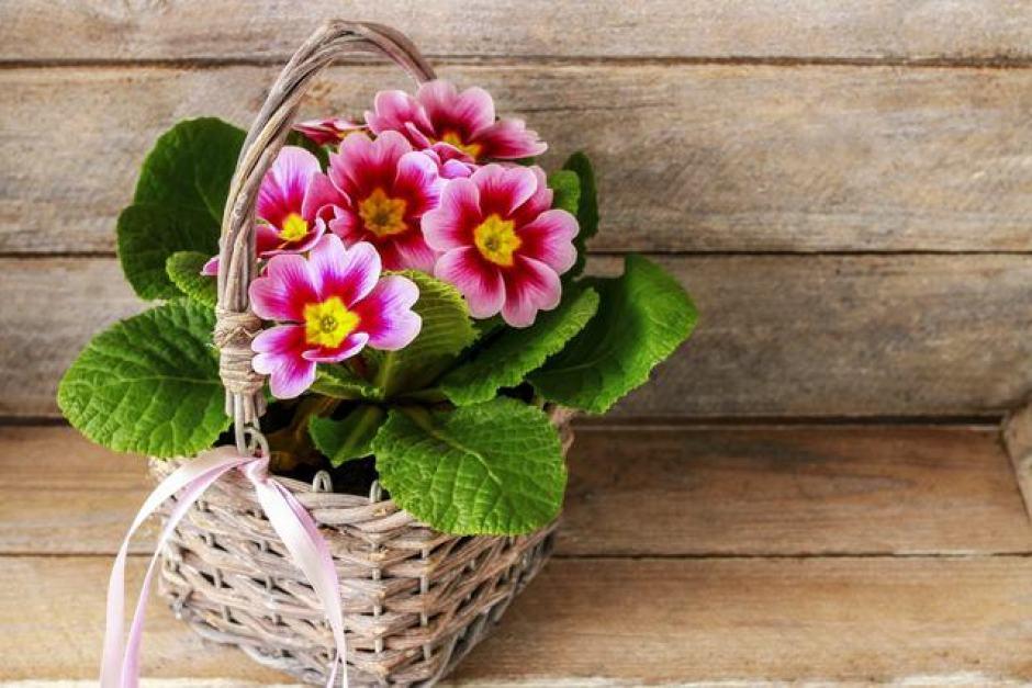 Un cesto in vimini, un'idea originale per abbellire i vasi di fiori e piante.
