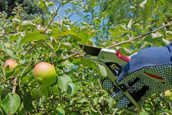 La potatura dei rami, un intervento delicato e fondamentale per piante e alberi.