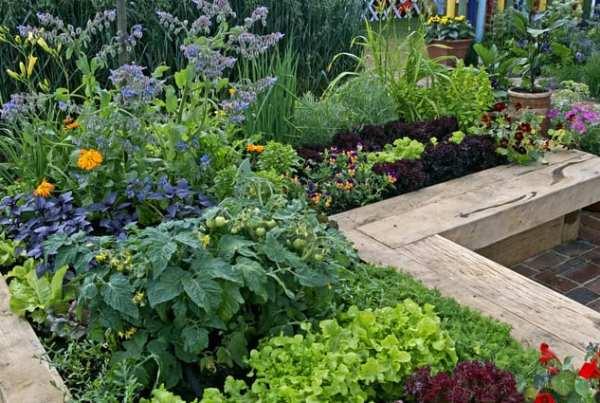 come realizzare e progettare un orto decorativo