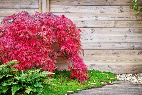 acero rosso per il giardino