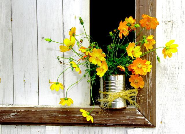 Vecchi contenitori come vasi originali e particolari