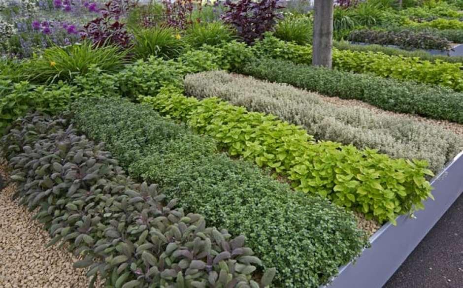 erbe aromatiche nell'orto decorativo