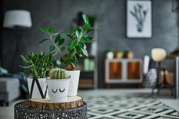 prendersi cura delle piante indoor dopo l'inverno
