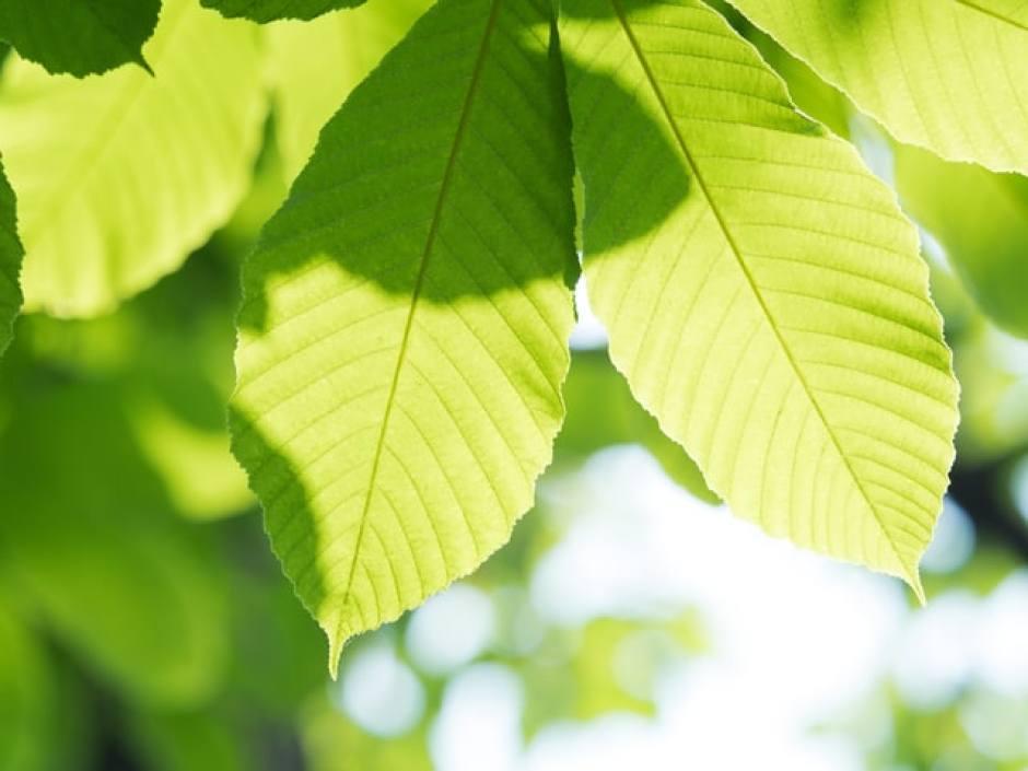 importanza delle foglie per ossigenare l'ambiente