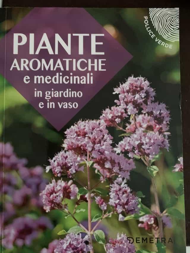 Piante aromatiche e medicinali: come coltivarle in giardino e in vaso