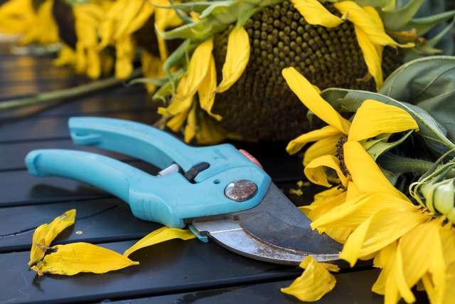 Le forbici da giardinaggio si usano molto negli orto ma anche per le piante da frutto