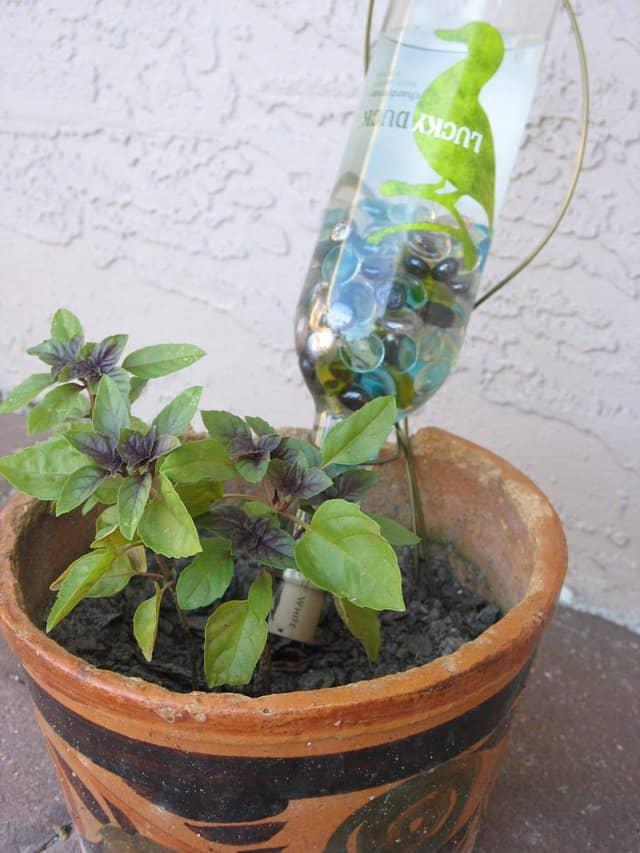 bottiglia d'acqua forata all'interno di un vaso: un metodo semplice ed economico per annaffiare le piante anche quando non siamo a casa