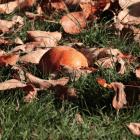 il giardinaggio in autunno: i lavori da fare