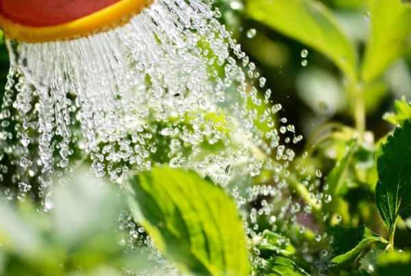 importanza acqua per le piante