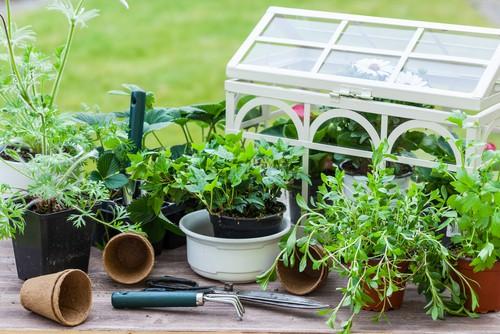 piccola serra decorativa per balcone o terrazzo