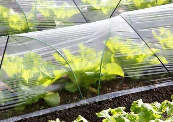 protezione per le piantine dell'orto