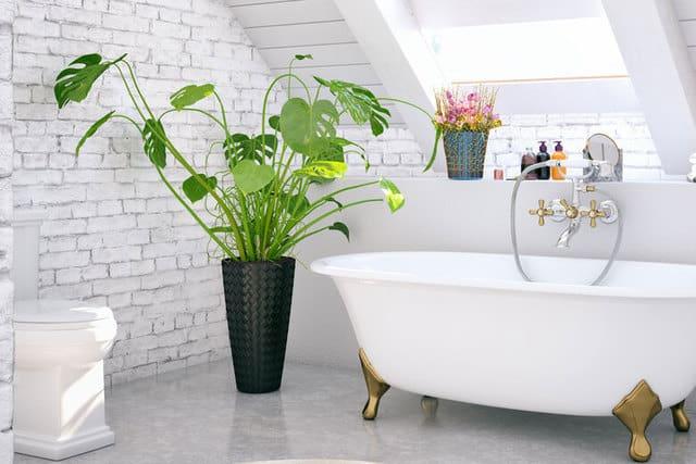 pianta di grandi dimensioni per decorare il bagno
