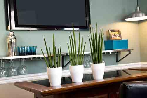 Sanseveria, una pianta di interni che ha bisogno di poca luce