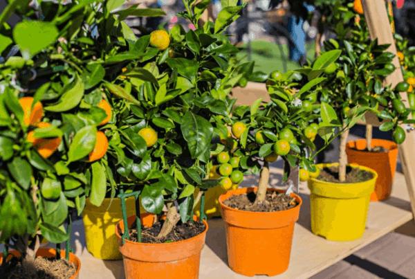Creare un frutteto che resiste al freddo