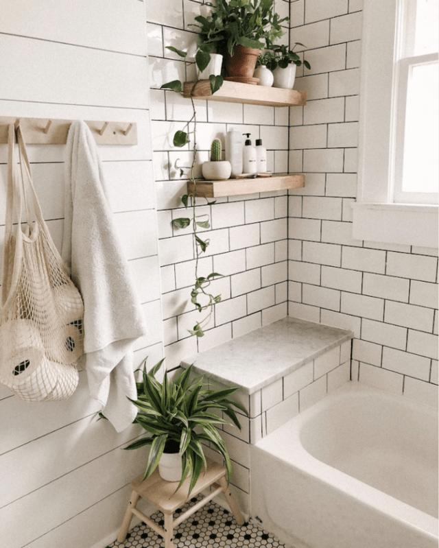Piante adatte per il bagno