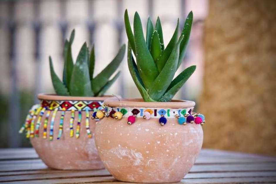 Piante succulente in vaso