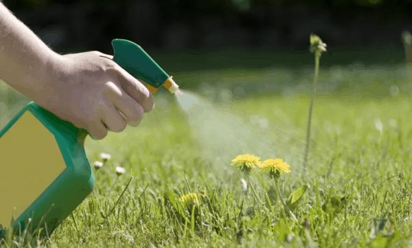Spray fai da te per eliminare le erbacce