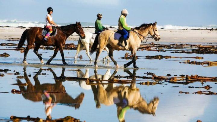 Les 7 avantages de faire une balade à dos de cheval en Camargue