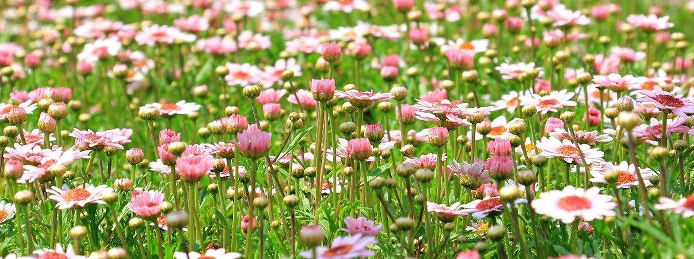 massif de fleurs