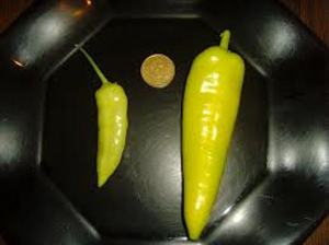 jaune hung