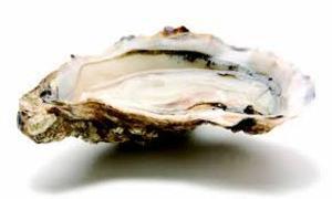 huîtres fines de claire
