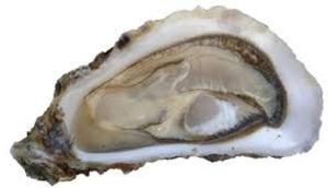 huîtres fines