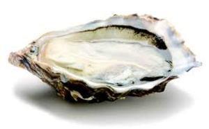 huîtres spéciales de claire