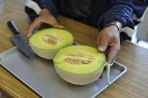 melon shizuoka